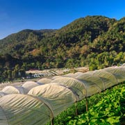 Doi Inthanon National Park Chiang Mai Day Royal Project