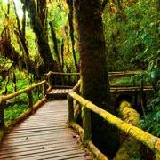 Doi Inthanon National Park Chiang Mai Day Tour Waterfall