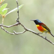 Doi Inthanon National Park Chiang Mai Day Tour Bird Seeing