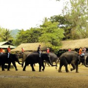 Chiang Mai Elephant at Work