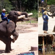 Chiang Mai Elephant at Work Dancing