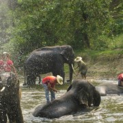 Maerim Chiang Mai Elephant at Work Playing
