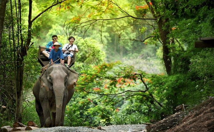 Maerim Chiang Mai Elephant at Work Smile