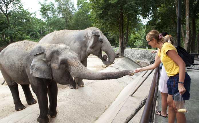 Chiang Mai Elephant Show at Mae Sa Elephant Camp