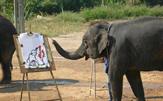 ขี่ช้าง ล่องแพ นั่งเกวียน ปางช้างแม่แตง เชียงใหม่