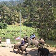 Chiang Mai Elephant Safari Eco Tour
