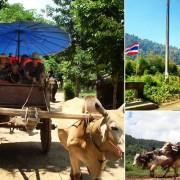 Chiang Mai Elephant Safari One Day Tour Ox-cart Riding