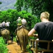 Chiang Mai Elephant Safari One Day Tour Elephant Trekking