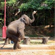 Chiang Mai Elephant Safari One Day Tour Elephant Show