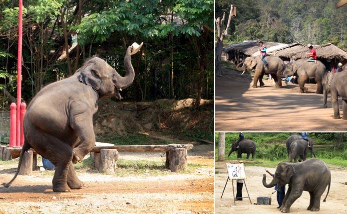 ขี่ช้าง เที่ยวปางช้าง แม่แตง เชียงใหม่