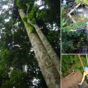 Eagle Track Zipline Adventure Chiang Mai Abseiling