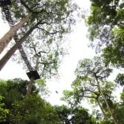 Jungle Flight Treetop Zipline Chiang Mai