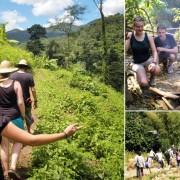 Chiang Mai Trekking Adventure Tour Rainforest