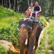 Chiang Mai Elephant Safari One Day Tour