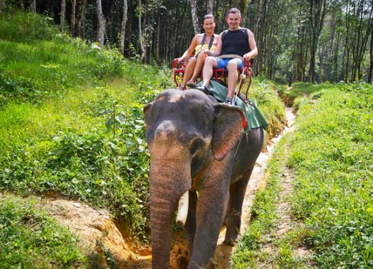 Chiang Mai Elephant Safari One Day Tour