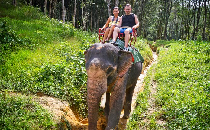 Image result for Elephant Trekking and Bamboo Rafting in Chiang Mai